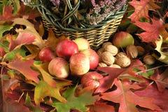 Autumn. Cornucopia - colorful leaves and fruits Stock Photos