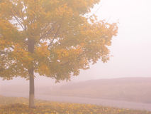Autumn 5. Morning fog and along maple royalty free stock photo