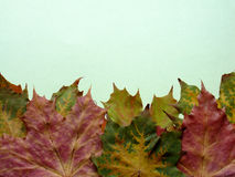 Autumn. Leaves on green background Royalty Free Stock Photos