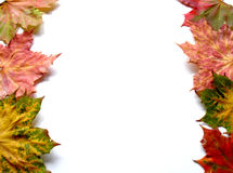 Autumn. Leaves on white background Stock Image