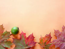 Autumn. Background made of leaves on orange background Stock Photos