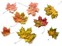 Autumn. Leaves on white background Royalty Free Stock Photo
