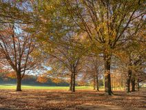 Autumn at the 5th hole. This pic was taken at the Killarney Country Club golf course in Autumn 2008. The bright green patch is the fairway Royalty Free Stock Photography