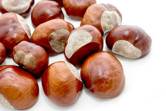 Autumn. Brown chestnuts over white background Royalty Free Stock Photo