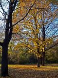 Autumn. Leaves stock photo
