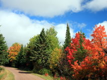Autumn. Red and yellow tree in September in the state of Minnesota Stock Photography