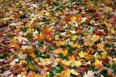 Autumn Royalty Free Stock Image