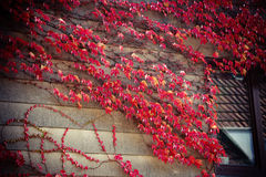 Autumn Royalty Free Stock Images