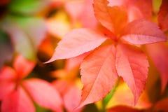 Autumn. Stock Photography