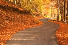 Autumn. Trees in the woods. Road Royalty Free Stock Images