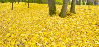Autumn. A Blanket of Leaves Covers The Woods At a Royalty Free Stock Photos