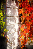 Autumn. Floral colorful background in garden Stock Image