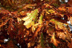 Autumn. Background possible to use for printing and project Royalty Free Stock Photos