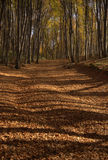 Autumn. Road covered with leaves in wood Stock Photo