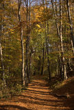 Autumn. Road covered with leaves in wood Royalty Free Stock Image