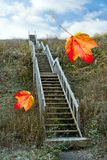 Autumn. Stairs at autumn  with blue sky and leaves Royalty Free Stock Image