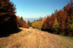 Autumn. A forest from Tulisa Mountain. Hiking to the top of mountain among beautiful trees (colored by autumn Royalty Free Stock Photography