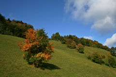 Autumn. Green field and autumn colors Royalty Free Stock Photo