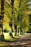 Autumn. Colorful trees in late autumn Royalty Free Stock Photography