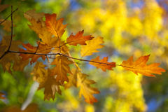 Autumn. Leafs green and yellow texture Stock Photography