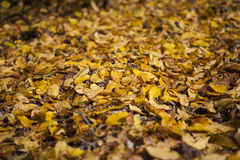 Autumn. Leafs green and yellow texture Stock Photo