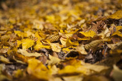 Autumn. Leafs green and yellow texture Royalty Free Stock Photo