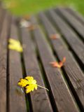 Autumn. Leaves fallen on a bench Stock Image