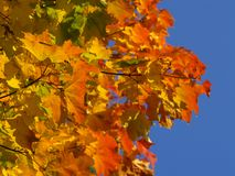 Autumn [8]. Colors of autumn Royalty Free Stock Photo