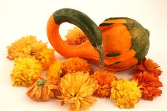 Autumn. An autumn gourd surrounded by mums Royalty Free Stock Image
