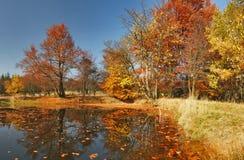Autumn. Colours at the lakeside Stock Photos