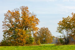 Autumn abandoned golf course. Beautiful Stock Image