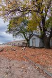Autumn in an abandoned train station royalty free stock photos
