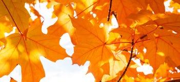 Autumn Abstract Arkivfoton