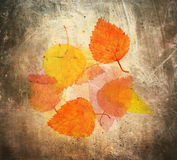 Autumn Abstract Fotografia Stock
