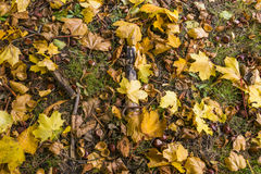 Autumn Abstract Fotos de archivo libres de regalías