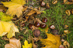 Autumn Abstract Foto de archivo
