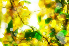 Autumn abstract background Royalty Free Stock Photos