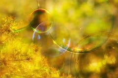 Autumn abstract background Stock Photos