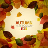 Autumn abstract background Stock Photography