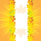Autumn abstract background. With leaf Royalty Free Stock Image