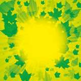 Autumn abstract background. Autumn green abstract background with leaf Stock Photography