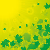 Autumn abstract background. Autumn green yellow abstract background with leaf Stock Images