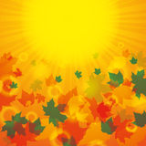 Autumn abstract background. Autumn colorful abstract background with leaf Stock Photos