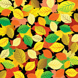 Autumn abstract background. Colorful leaves Royalty Free Stock Photo
