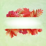 Autumn abstract background with colorful leafs. Stock Photo