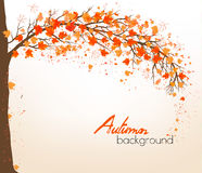 Autumn abstract background with colorful leaves. Vector vector illustration