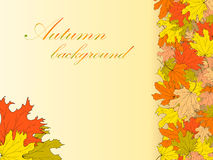 Autumn abstract background with colorful maple leaves. Autumn background with colored maple leaves at the right of the picture Royalty Free Stock Photo
