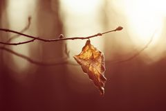 Autumn dry leaf. Autumn abstract background with dry leaf at sunset, vintage retro image Royalty Free Stock Photos