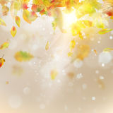 Autumn abstract background. EPS 10 vector. Autumn abstract background. Smooth light warm sun template. And also includes EPS 10 vector Stock Photo