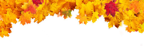 Autumn abstract background with falling leaves Royalty Free Stock Photo